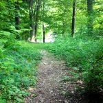 inviting-path